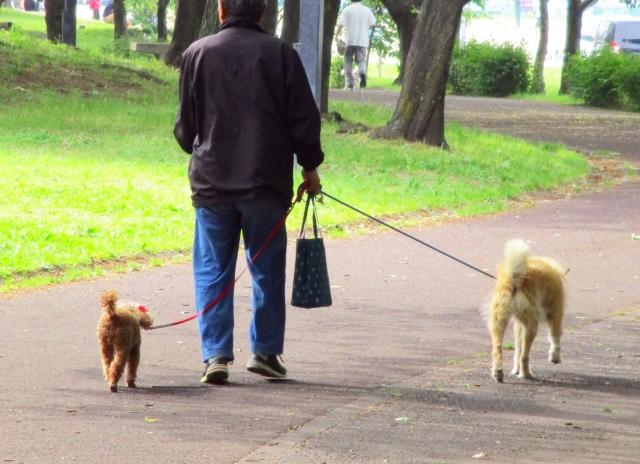 お散歩する人と犬