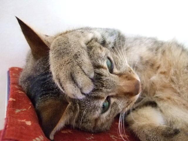 猫のしつけ