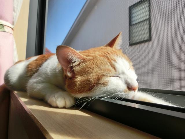 猫ビタミン摂取中