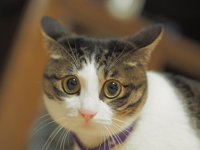 猫驚き警戒