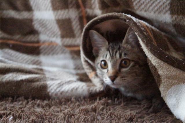 猫家づくり