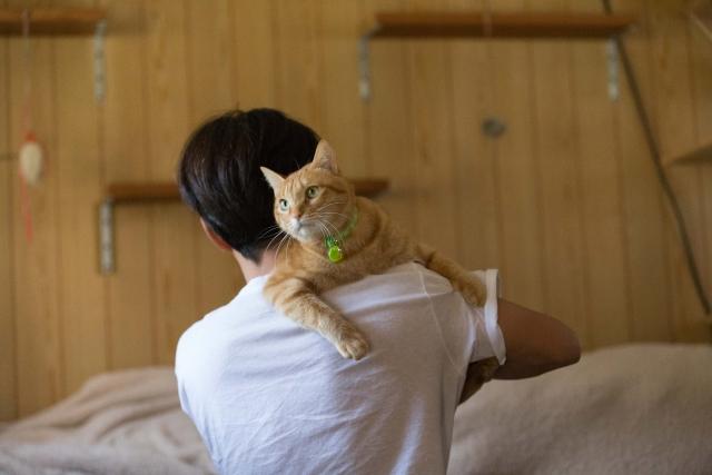 猫と触れ合う