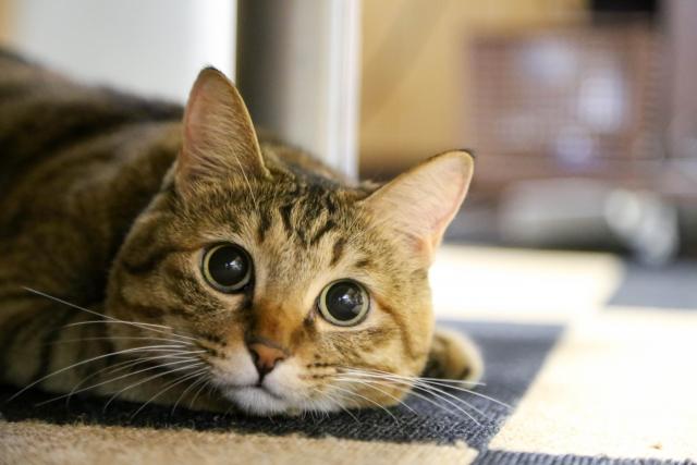 猫の性格特徴種類