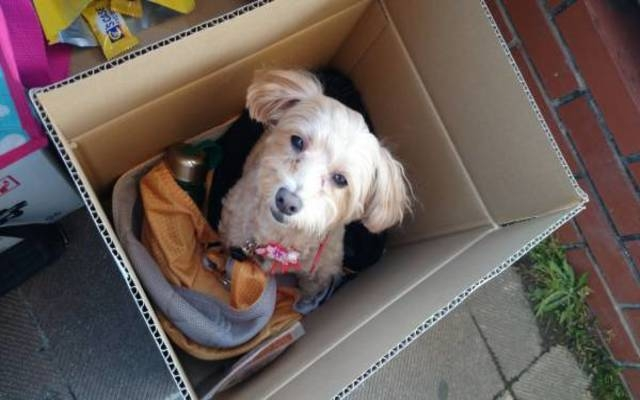 箱に入った犬
