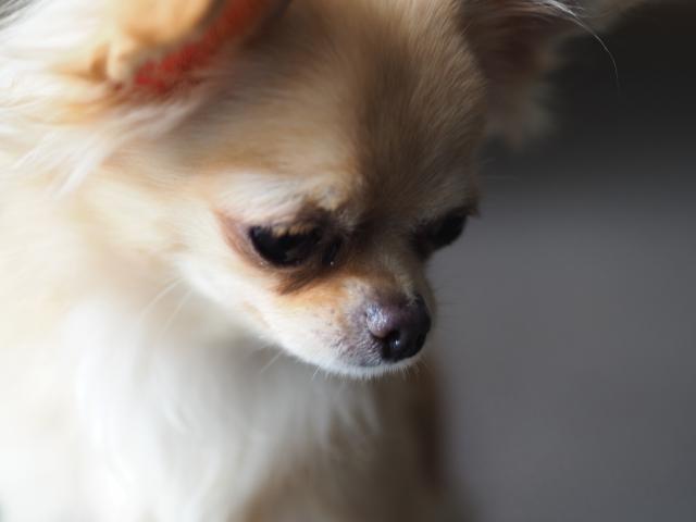 うつむく犬