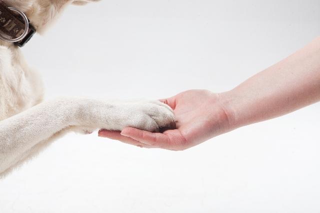 犬を飼う心構え