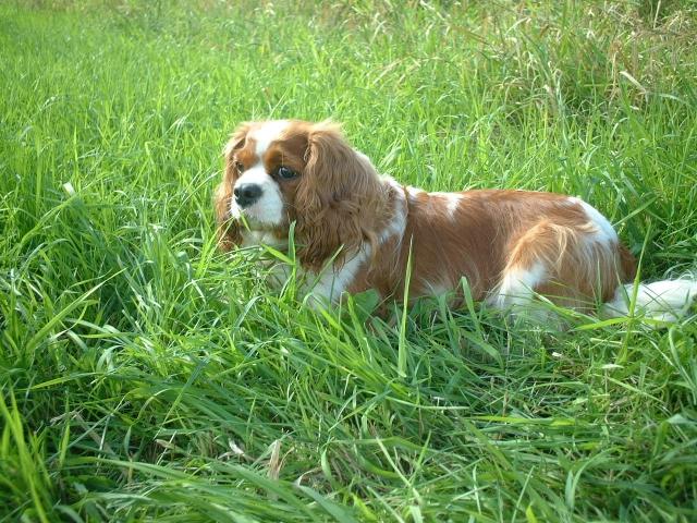 草むらの中の犬