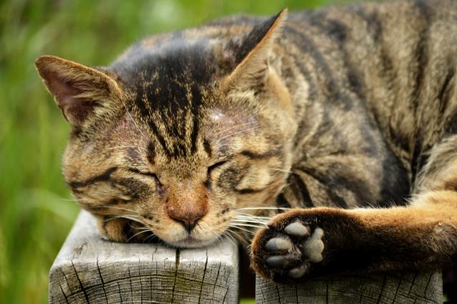 猫好きと仕事