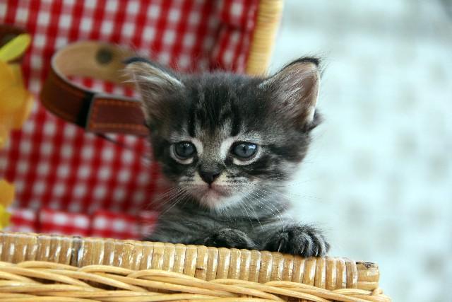 猫探しポイント