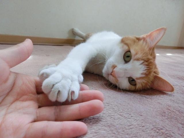 猫と人の手