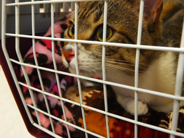 キャリーに入った猫