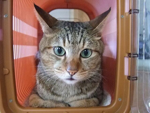 キャリーケースの猫