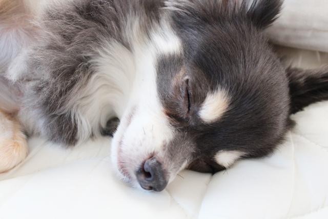 目をつぶった犬
