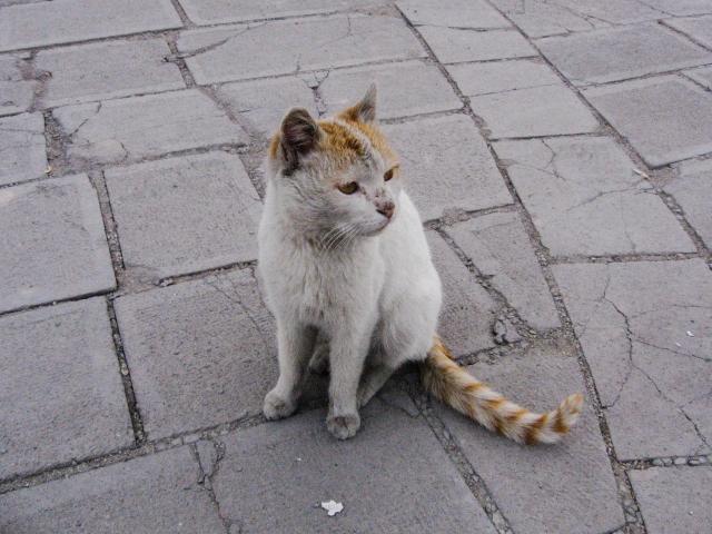 猫の体にデキモノやしこりがある時疑いたい病気