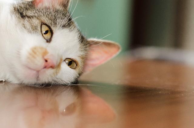 猫体調不良
