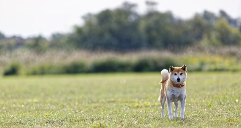 犬と暮らす日々